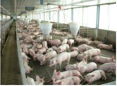 猪场内如何正确使用过氧乙酸预防口蹄疫?