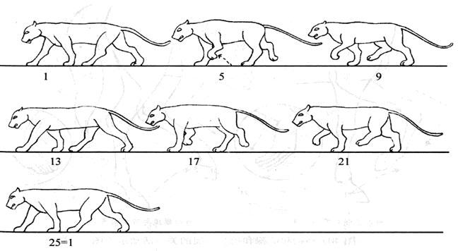 四足动物的走路特征